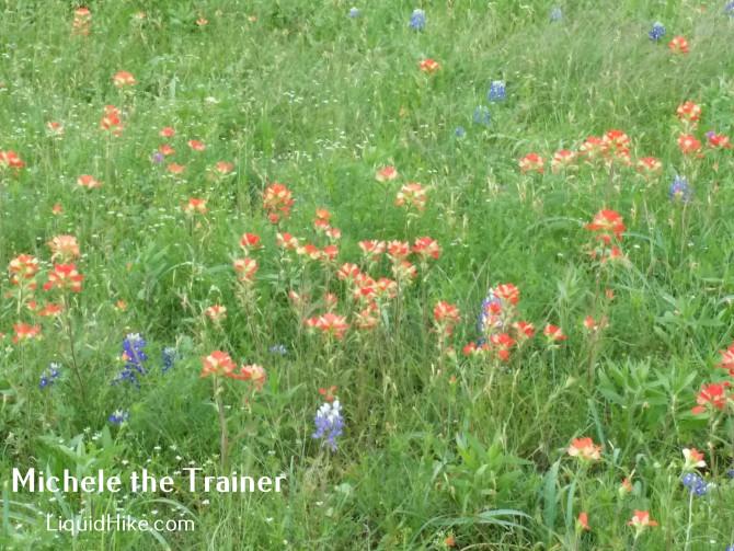 Flotus Plants Austin April Flowers That Color Spring Blue